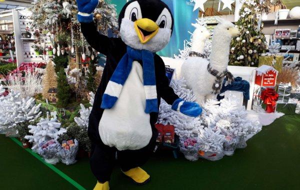 Mascotte pingouin 199 B