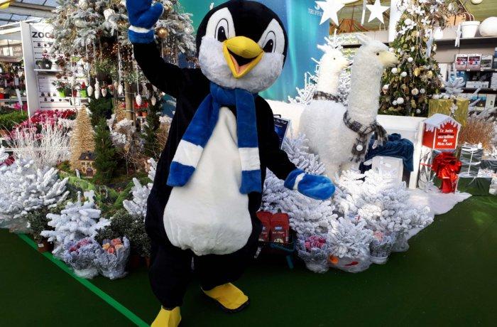 location Mascotte pingouin 199 B ile de france